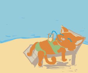 Bikini cat enjoys a beverage on the beach