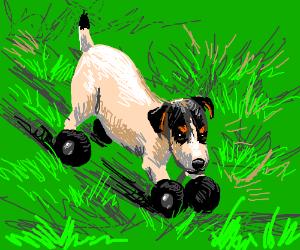 Dog with wheelfeet