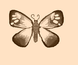 Moth in sepia.