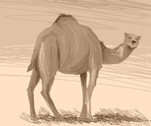 desert w/ camel