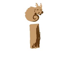 Squirrel-idot