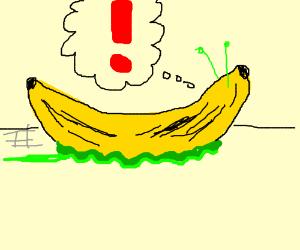 banana slug is alarmed