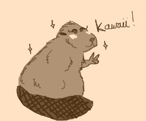 Mr asian beaver