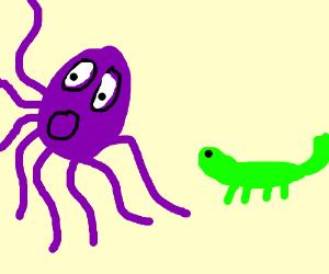 Scottish octopus scared of lizard