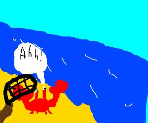 Crab runs to shore to avoid net