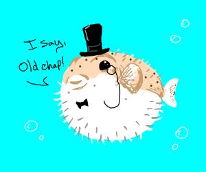 Gentleman Pufferfish.