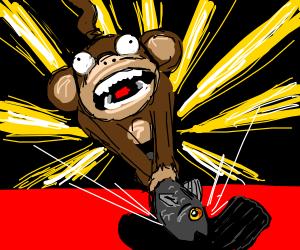 Monkey slaps black sock with fish