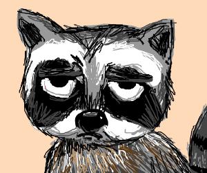 Cranky raccoon