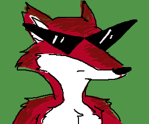 Cool fox in shades