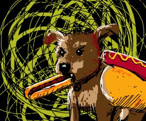 Dog eating a hot dog