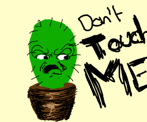 Don't touch the damn cactus