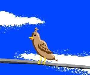 Sausagebird