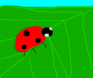L-ady bug