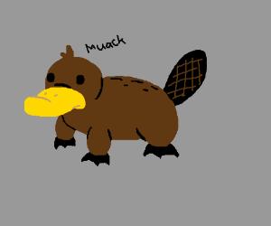 Some sort of duck-beaver hybrid