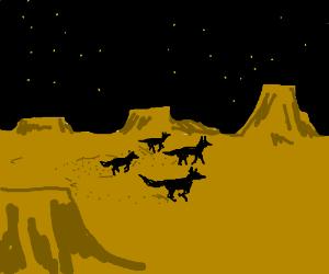 Group of wolves running through a desert