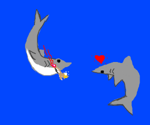 Shark proposal