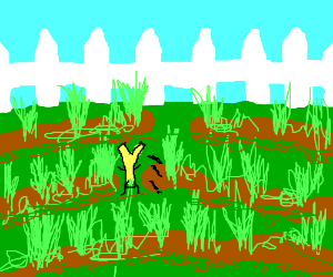 "a down-under ""Y"" jumping throw my garden"
