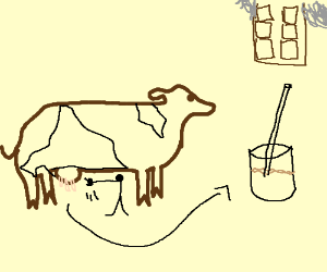 Milking a brown cow gives chocolate milk