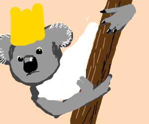 the queen of all koalas