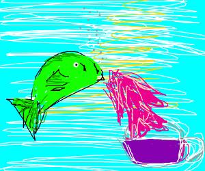 Fish vomits kool aid