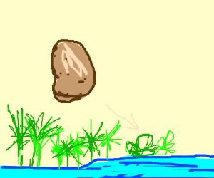 papyruss potato