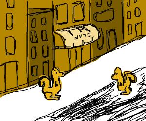 Squirrel town.