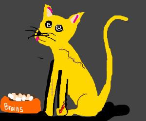 Yellow hypnotized zombie cat
