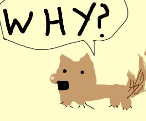 dog under why