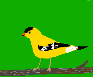 A yellow finch