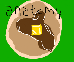 pancakes anatomy