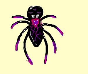 purple heart spider