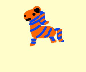 Blue and orange zebra.