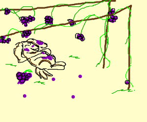 Dog Hovering Grapes over stomach