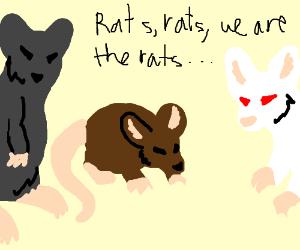 """Rats sing: """"Rats, rats, we are the rats..."""""""