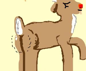Reindeer's butt