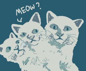 Kitty Cerberus