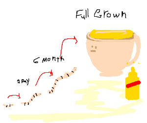 Worm grows, becomes teacup filled with mustard