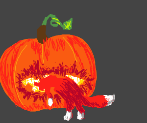 pumpkin eating fox