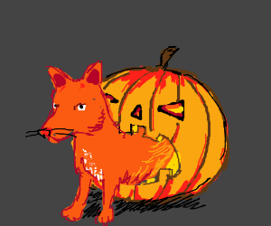 Pumpkin-Slowbro-Fox hybrid