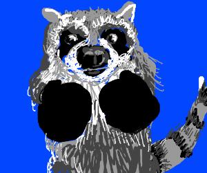 Boxer raccoon