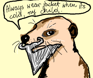 Grizzled meerkat gives genuine life advice