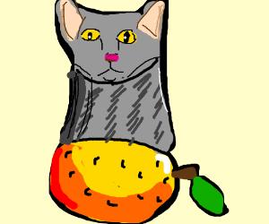 Half-and-half orange/grey cat