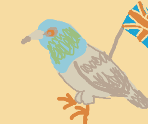British pigeon