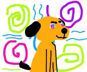 dog on acid