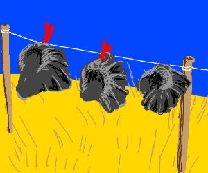 Elephants ears on a clothesline