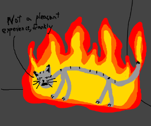 An anorexic cat discuss being on fire