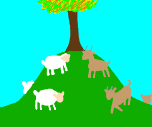 Sheep and goats meet on a hill