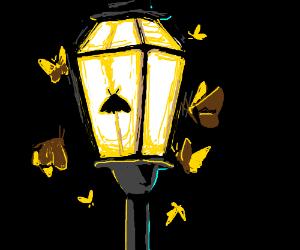 like a moth to a streetlight