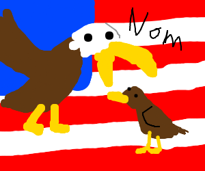 Bald eagle eating eagle. Only in 'MERICA