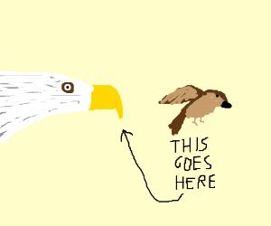 eagle eats sparrow